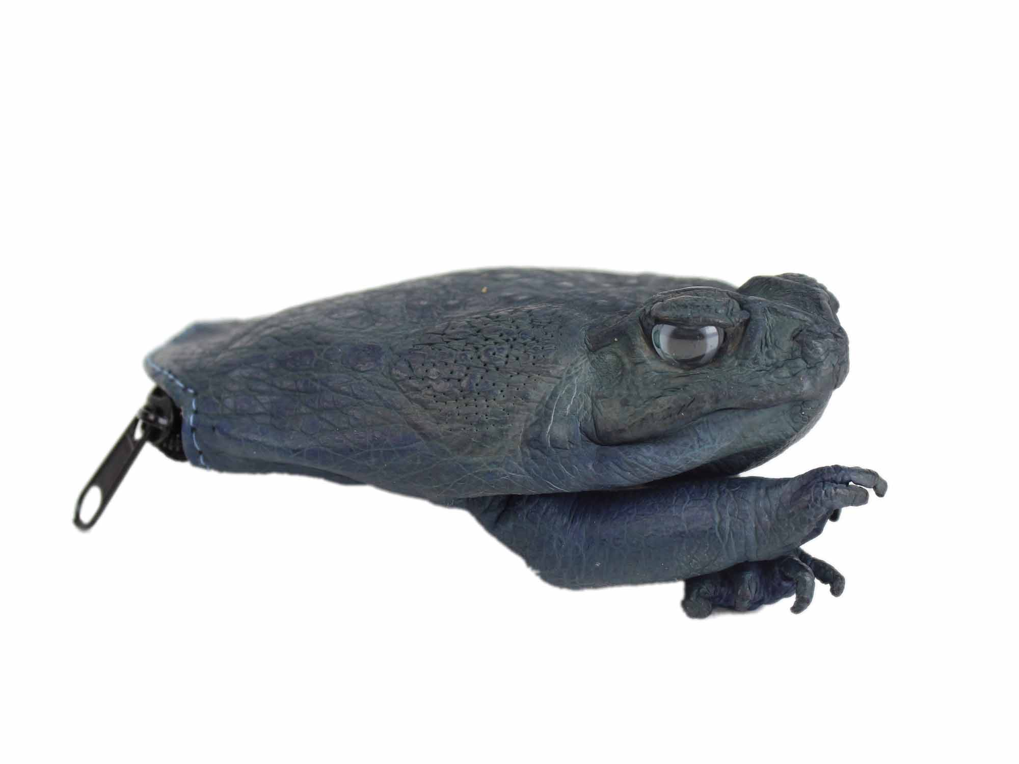 Dyed Cane Toad Coin Pouch: Medium/Large: Navy Blue