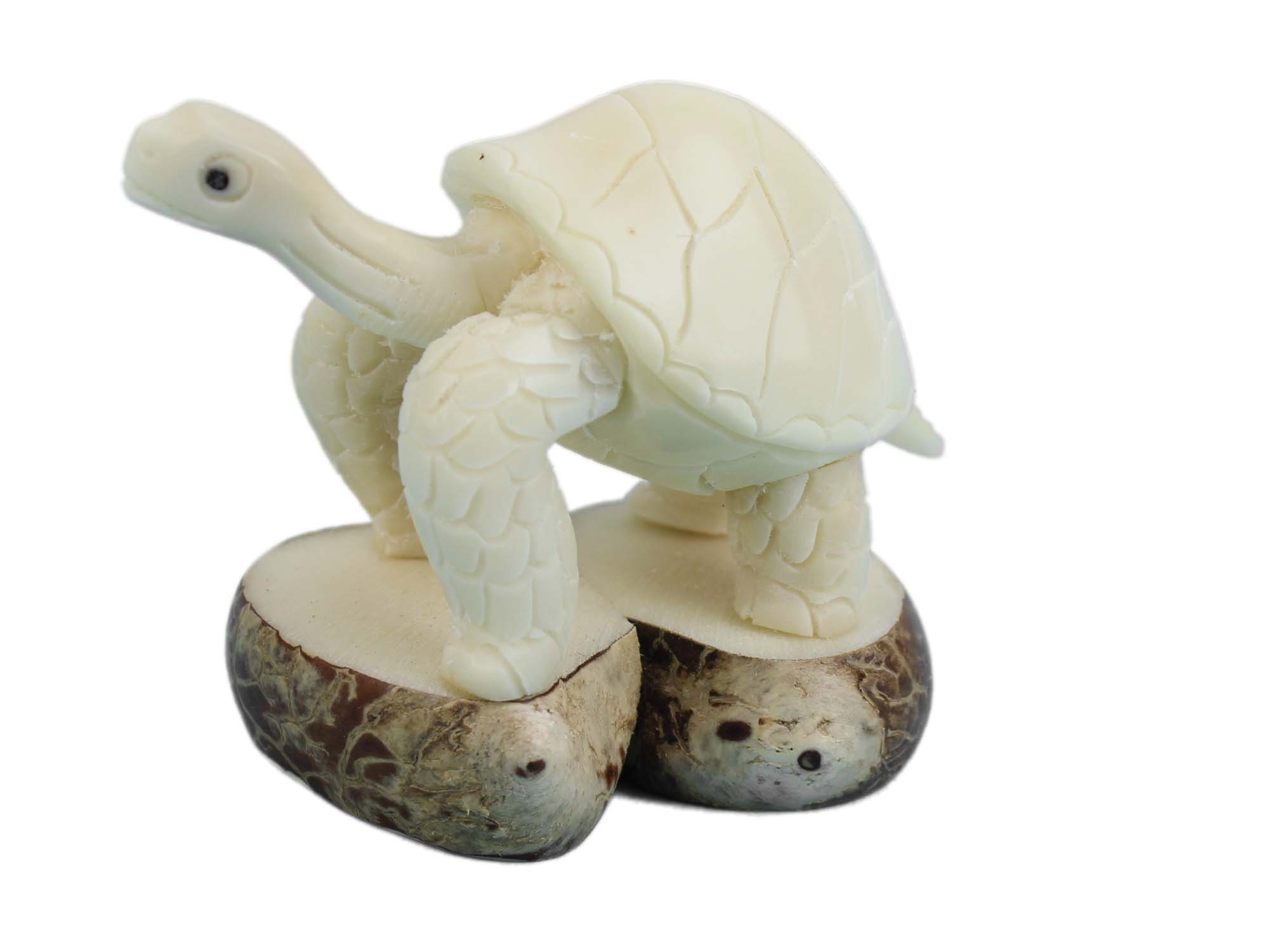 Tagua Nut Carving: Galapagos Turtle