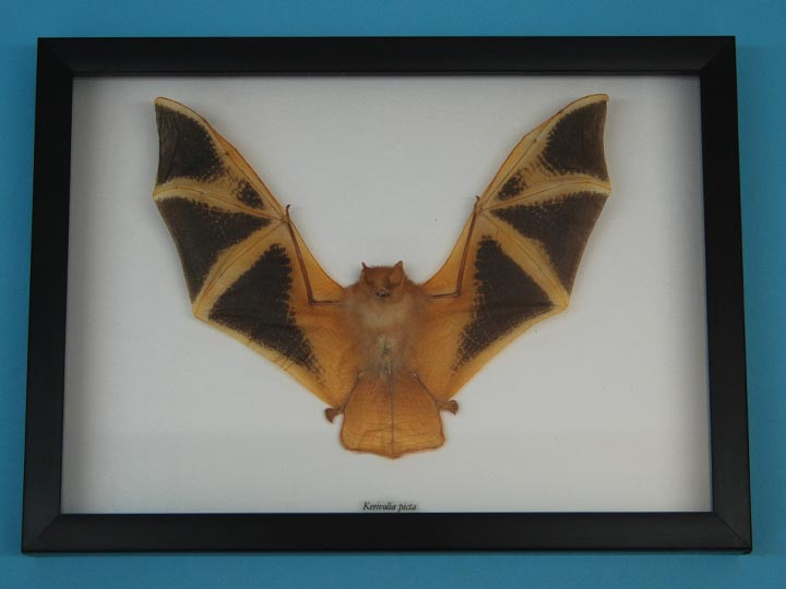 Framed Yellow Bat