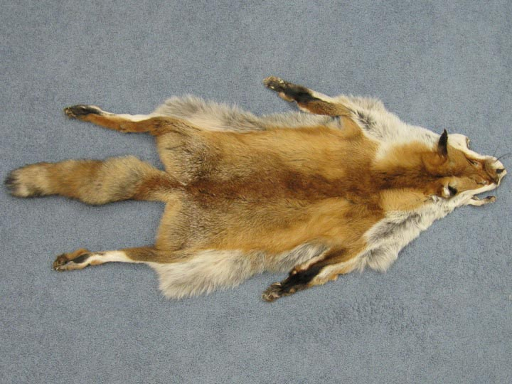 Red Fox Skin with Feet