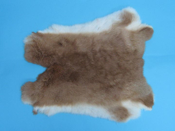 Czech #1/#2 Breeder Rabbit Skin: Fawn  Fawn rabbit skins, Czech Fawn rabbit fur, Czech rabbit pelt, natural color, rabbit, Fawn