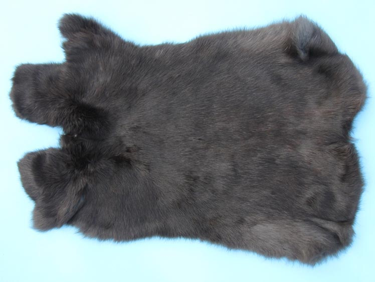 Czech #1/#2 Breeder Rabbit Skin: Black