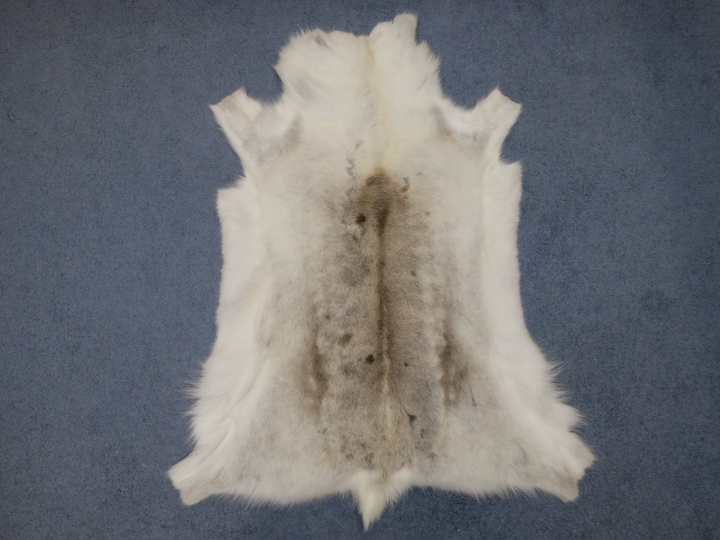 Reindeer Calf Hide: #2 High Grade: Assorted