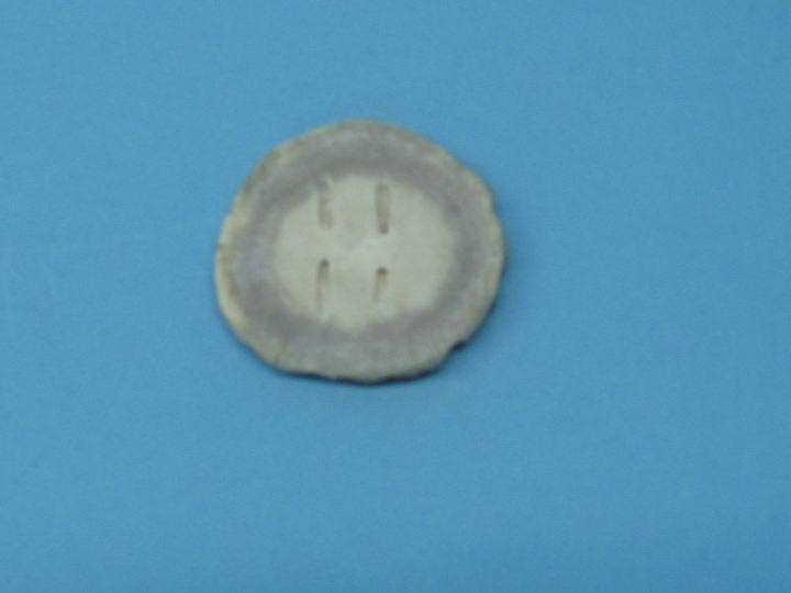 Cross-Cut Blind-Hole Moose Antler Button: 2.5-3.0""