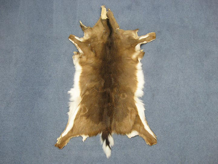 White Tail Deer Hide: #1: Assorted
