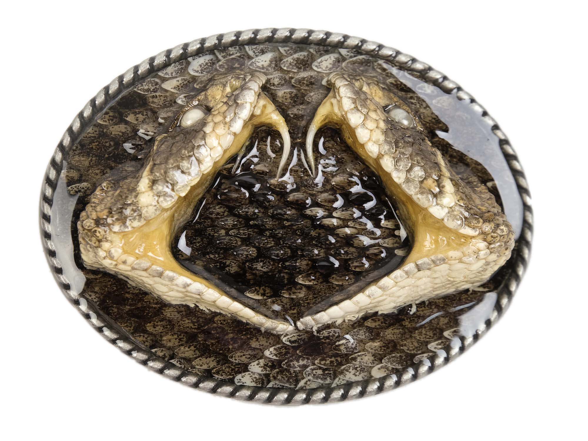 Real Rattlesnake Belt Buckle: Duelling Heads