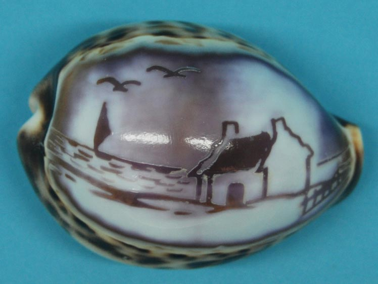 Engraved Cowrie Shell: House