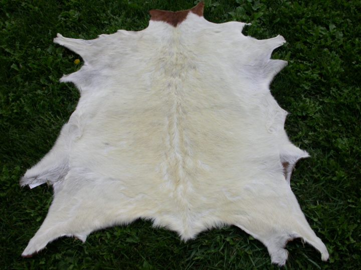 Boar Bok Skin: Gallery Item