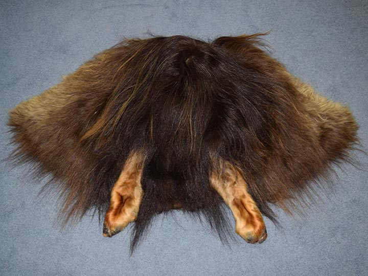 Musk Ox Hide: Gallery Item