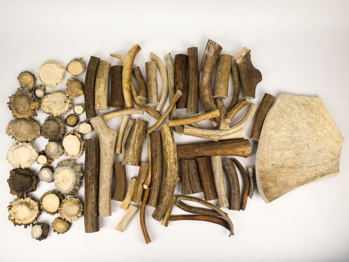 Box of Moose Antler Pieces: Gallery Item