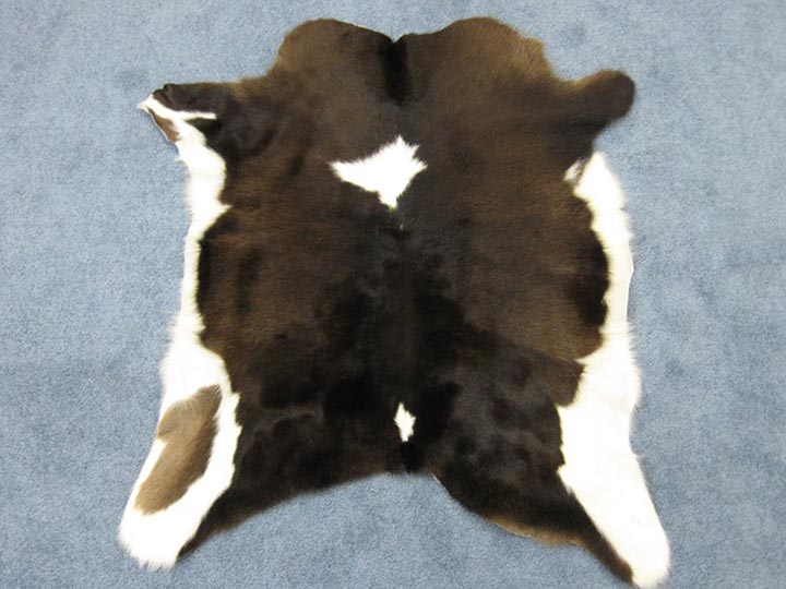 Calf Skin: Gallery Item