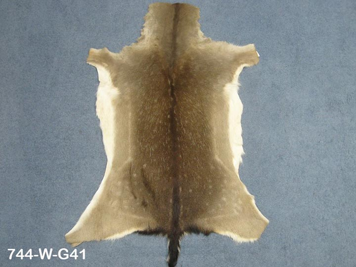 Hungarian Fallow Deer Hide: Winter Phase: Gallery Item