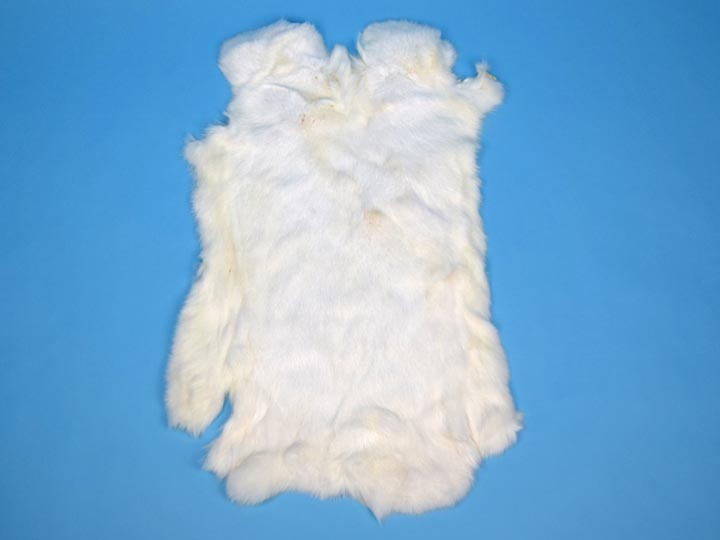 Chichesters Best Collection: White Czech Rabbit Skin: Gallery Item