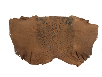 Cane Toad Skin: Brown