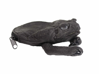 Dyed Cane Toad Coin Pouch: Medium/Large: Black