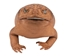 Lucky Cane Toad: Large with coin - 1019-31L-NA (C15)
