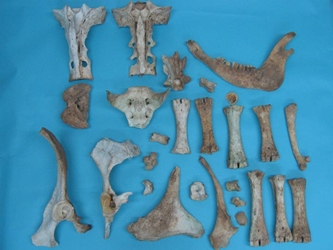 Cow Bones: Assorted (lb)