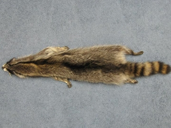 Raccoon Skin with Feet: Assorted