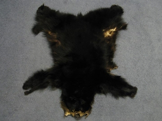 Craft Grade Black Bear Skin: Assorted