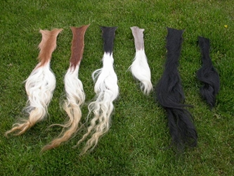 Washed and Dried Cow Tail