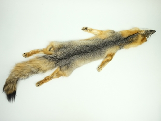 American Gray Fox Skin with Feet: Assorted