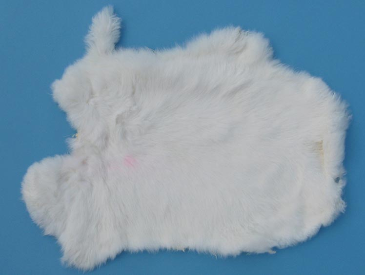 Clipper Rabbit Skin: White
