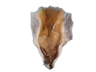 Red Fox Face: #3