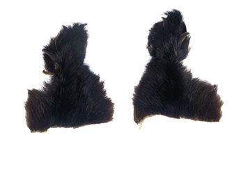 Black Bear Front Feet with Claws