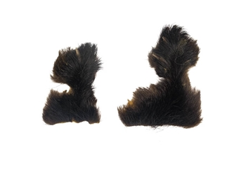 Black Bear Rear Feet with Claws