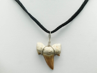 Otodus Fossil Shark Tooth Necklace: Black Suede Cord