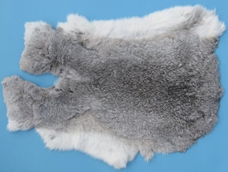 Czech #1/#2 Breeder Rabbit Skin: Silver Chinchilla