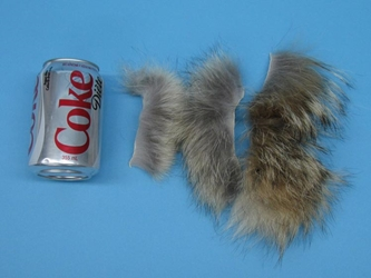 Premium Coyote Fur Scrap: Small (lb)