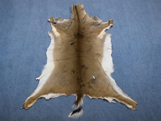 White Tail Deer Hide: Short Hair: Assorted