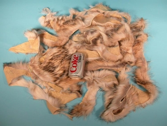 North American Badger Fur Scrap (lb)