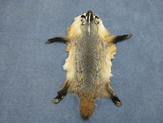North American Badger Skin with Feet: Assorted