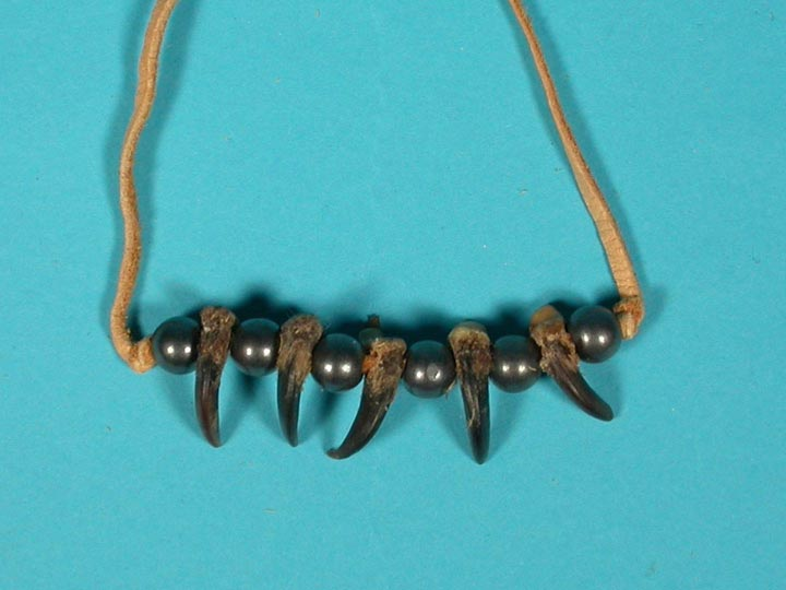 Real 5-Claw Coyote Necklace