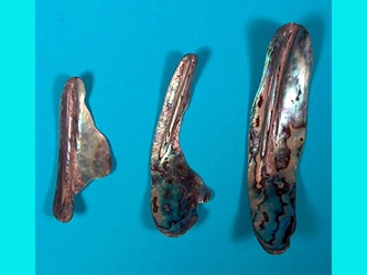 Paua Shell Pieces: Fans (lb)