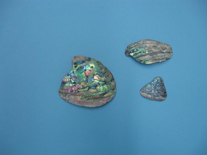 Paua Shell Pieces: Natural (tumbled): Assorted sizes (20-80mm) (lb)