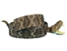 "1.25"" Real Rattlesnake Hat Band with Head & Rattle: Open Mouth - 598-HB204 (B5)"