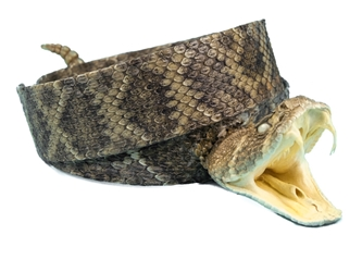 "1.25"" Real Rattlesnake Hat Band with Head & Rattle: Open Mouth rattlesnake hatbands"