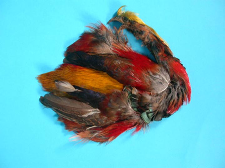 Golden Pheasant: #1: Natural Color