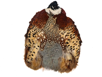 Ringneck Pheasant without Tail: #1: Natural Color