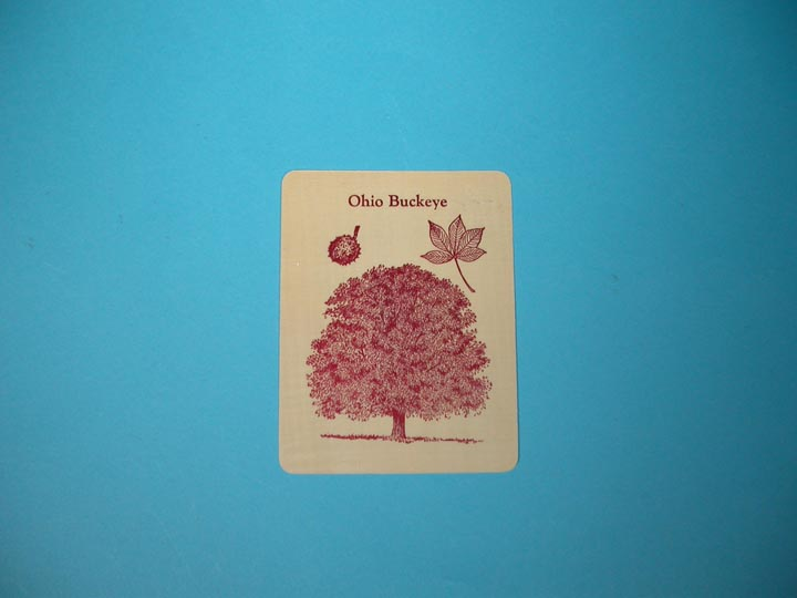 Ohio Buckeye Tree Wooden Postcard