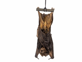 Hanging Java Pipistrelle Bat