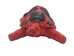 Raffia Turtle: Small: Assorted - 1347-TUS-AS (11U)