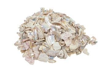 African Abalone Pieces: Assorted Sizes: Bleached White (kg)