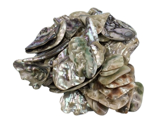 Mexican Green Abalone Shell Pieces: Extra Large (1/2 lb) unpolished chipped broken Mexican green abalone shell