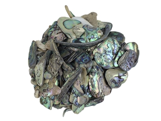 Paua Shell Pieces: Natural: Unsorted (1/4 lb)