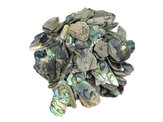 Paua Shell Pieces: Satin: Small (1/4 lb)