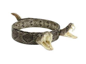 "1"" Real Rattlesnake Hat Band with Rattle and 2 Heads (Open Mouths) rattlesnake hatbands"